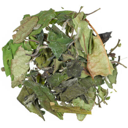 weißer Tee - Pai Mu Tan